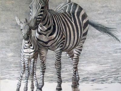Animals of the Savana